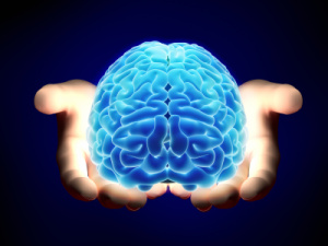 Photo-of-Brain-in-Hands